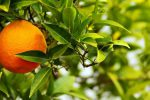 Le bain orange amère comme remède maison pour se détendre