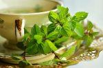Le thé vert et le thé Matcha pour la détox